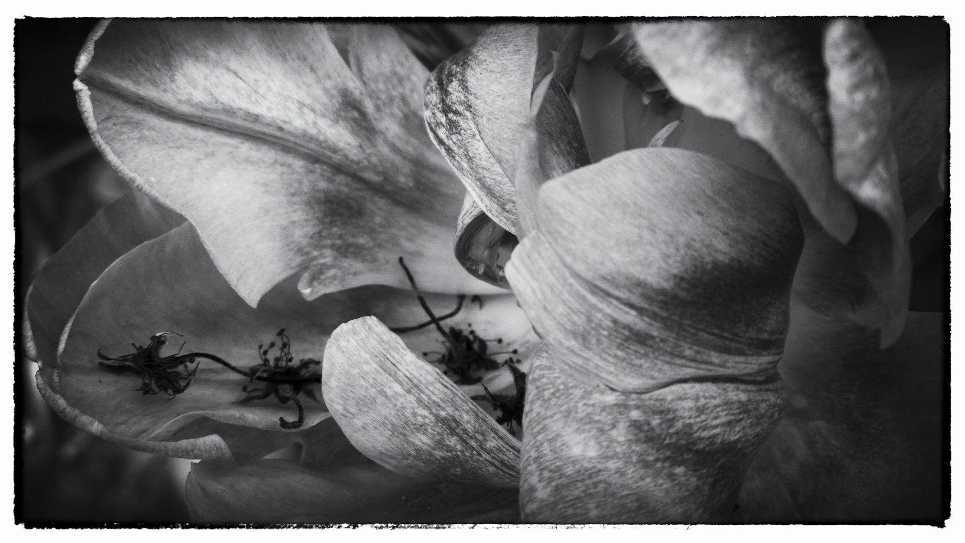 Nokia bloemen (12 van 21)