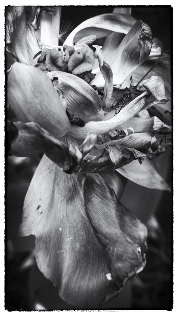 Nokia bloemen (15 van 21)