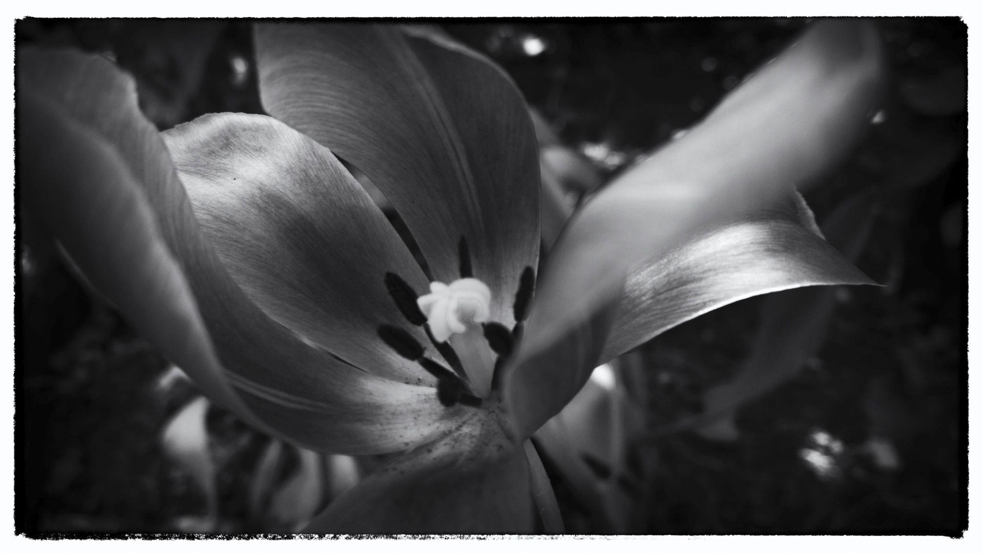 Nokia bloemen (18 van 21)