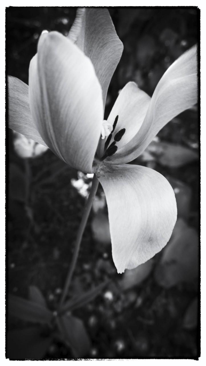 Nokia bloemen (19 van 21)
