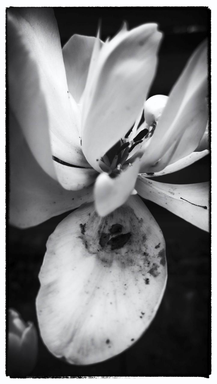 Nokia bloemen (4 van 21)