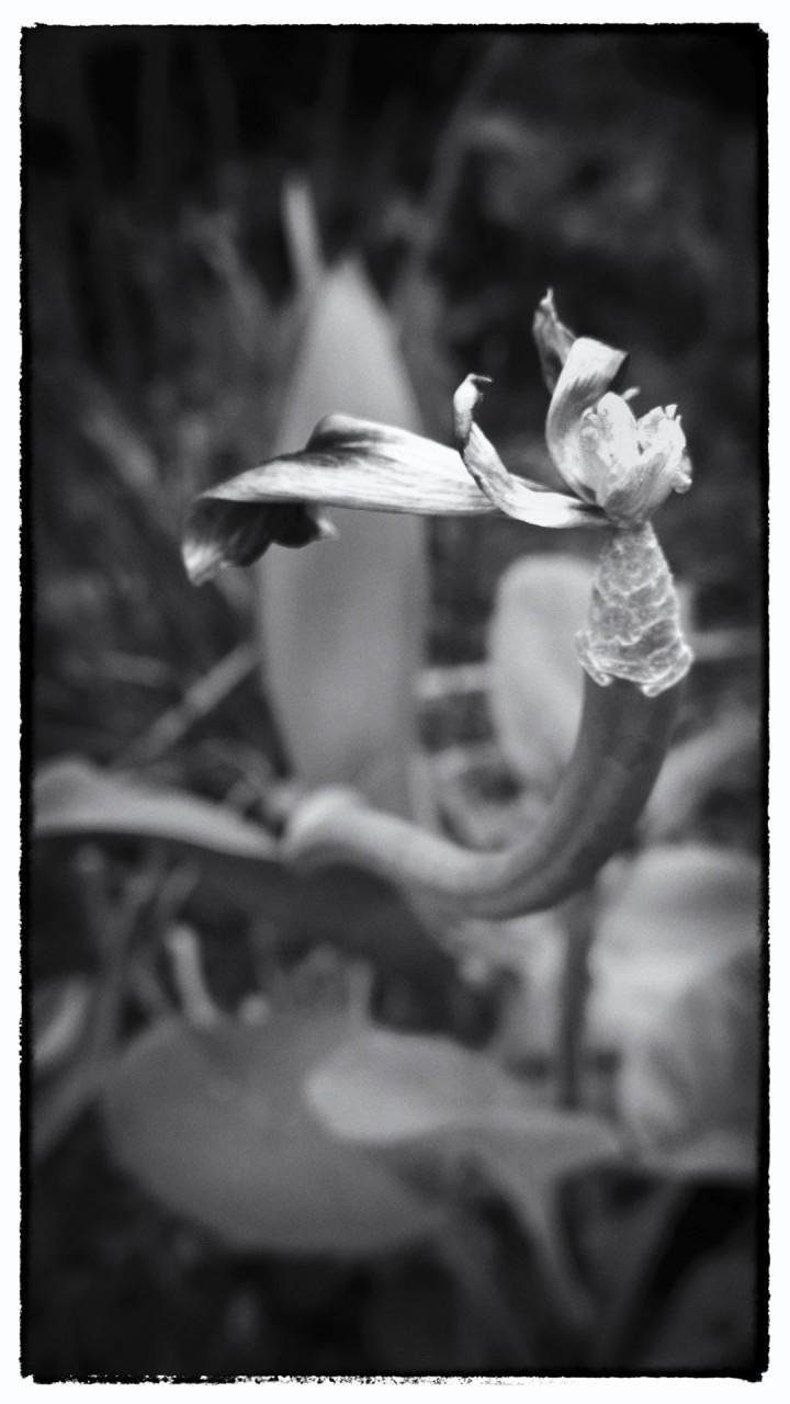 Nokia bloemen (5 van 21)