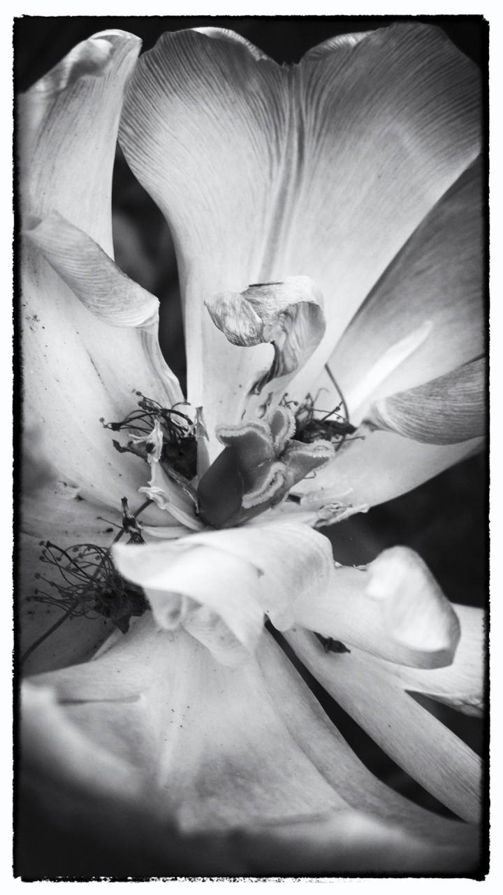 Nokia bloemen (6 van 21)