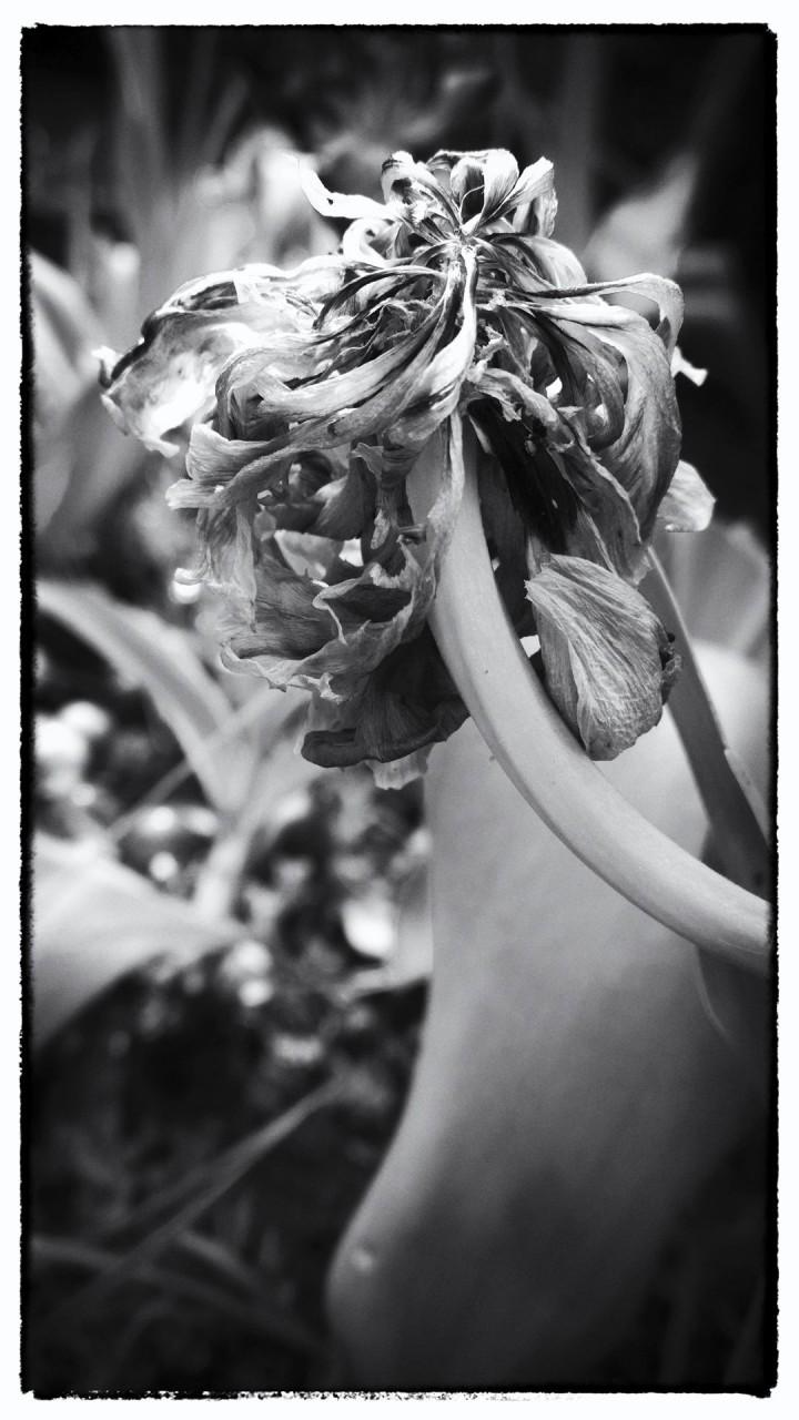 Nokia bloemen (9 van 21)